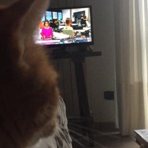 Schumy, attento telespettatore di TG