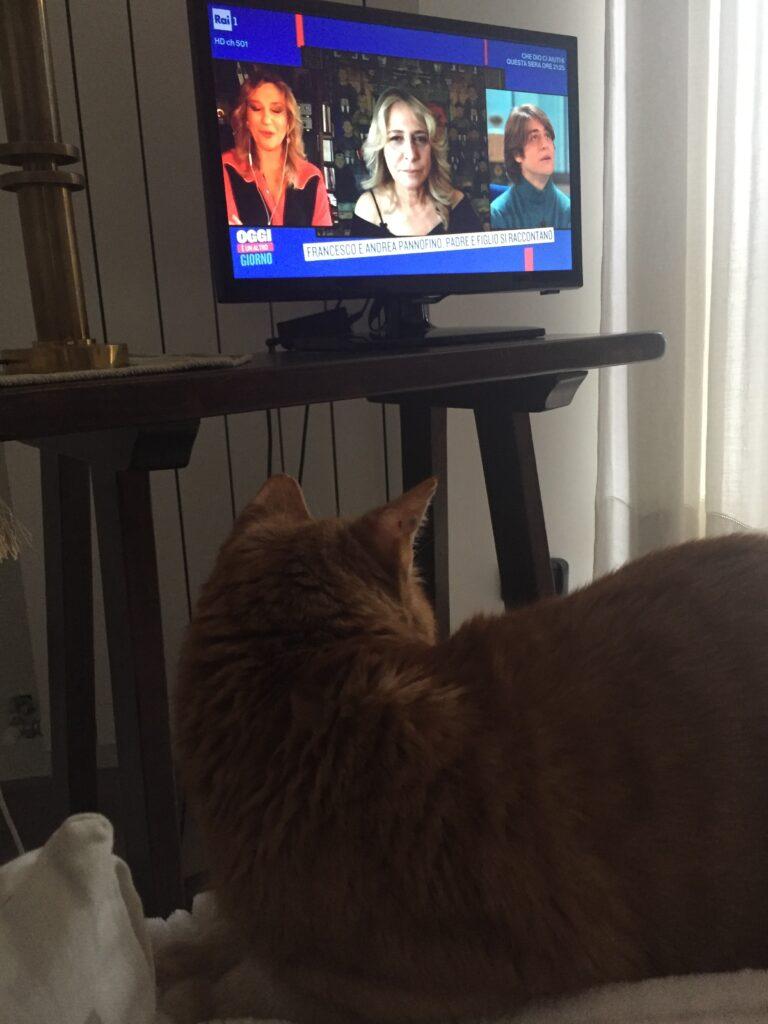 Schumy e il relax con i programmi tv del primo pomeriggio